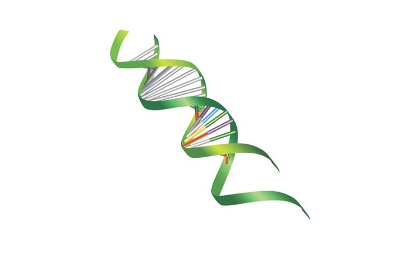 کاربرد قواعد کشفی و الگوریتم ژنتیک در ساخت مدل ARMA برای پیش بینی سری زمانی