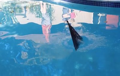 flying-fish-1