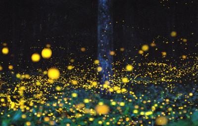 04-fireflies-in-japan1